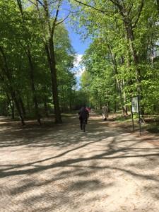 riding through the Tiergarten