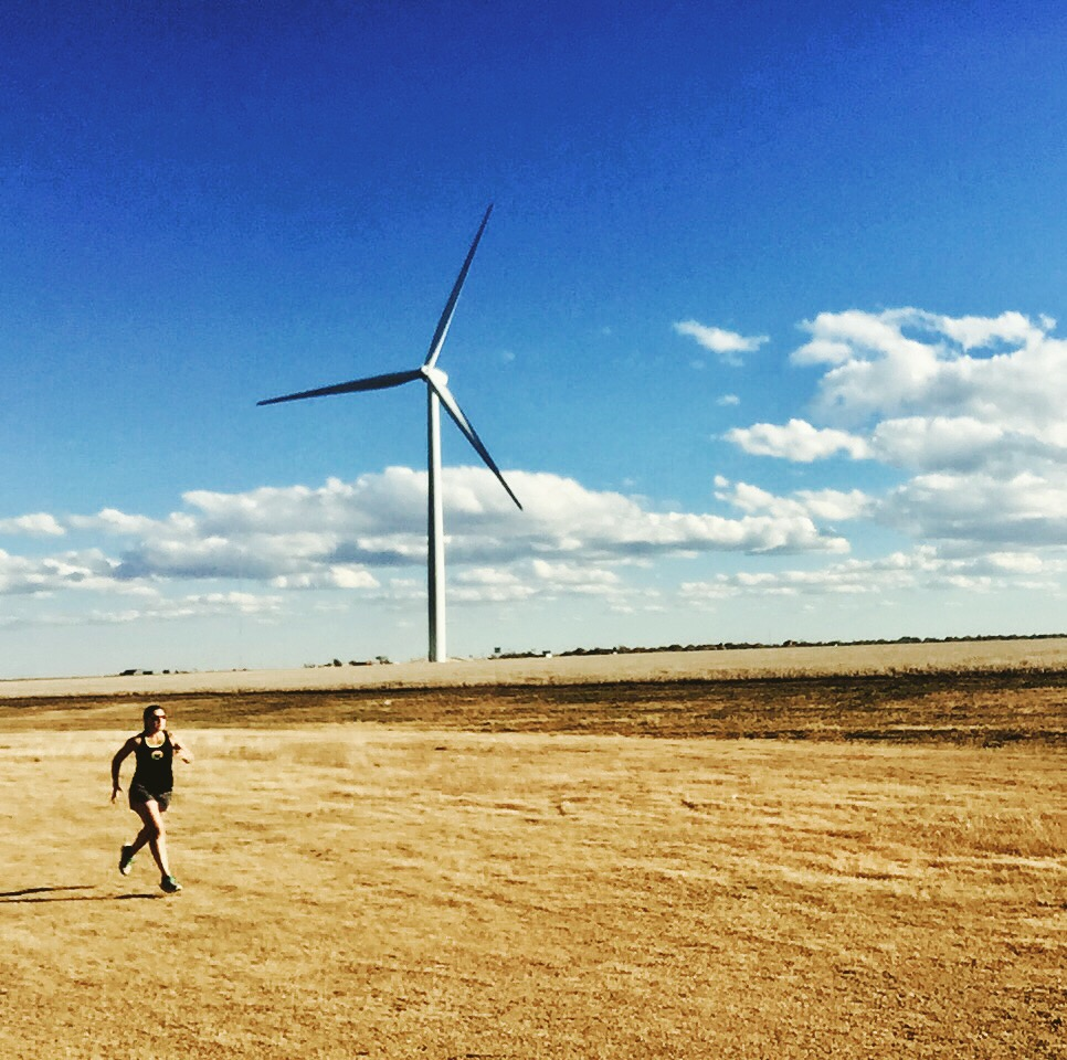 windmills as far as the eye can see